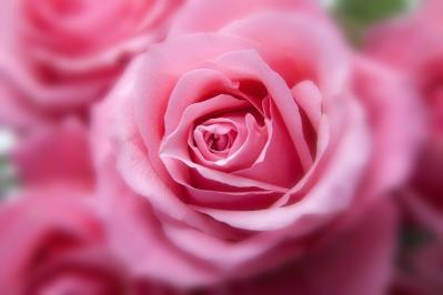 roses-194110_1920.jpg